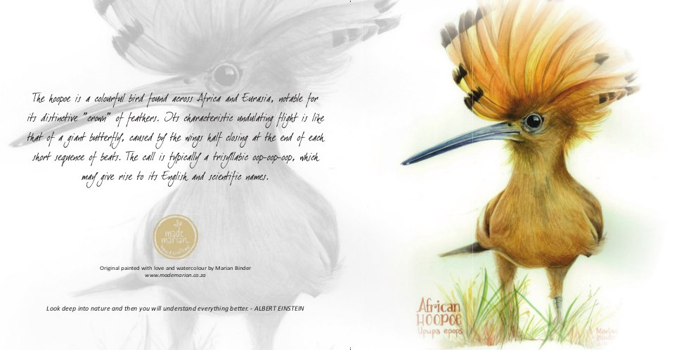 african-hoopoe-card-made-marian