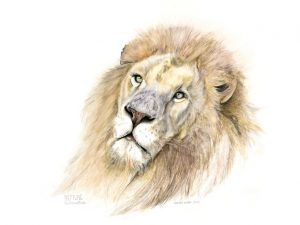 Limited Edition Prints lion-portrait-made-marian