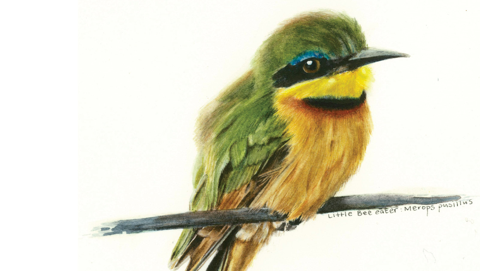 home3 little bee-eater