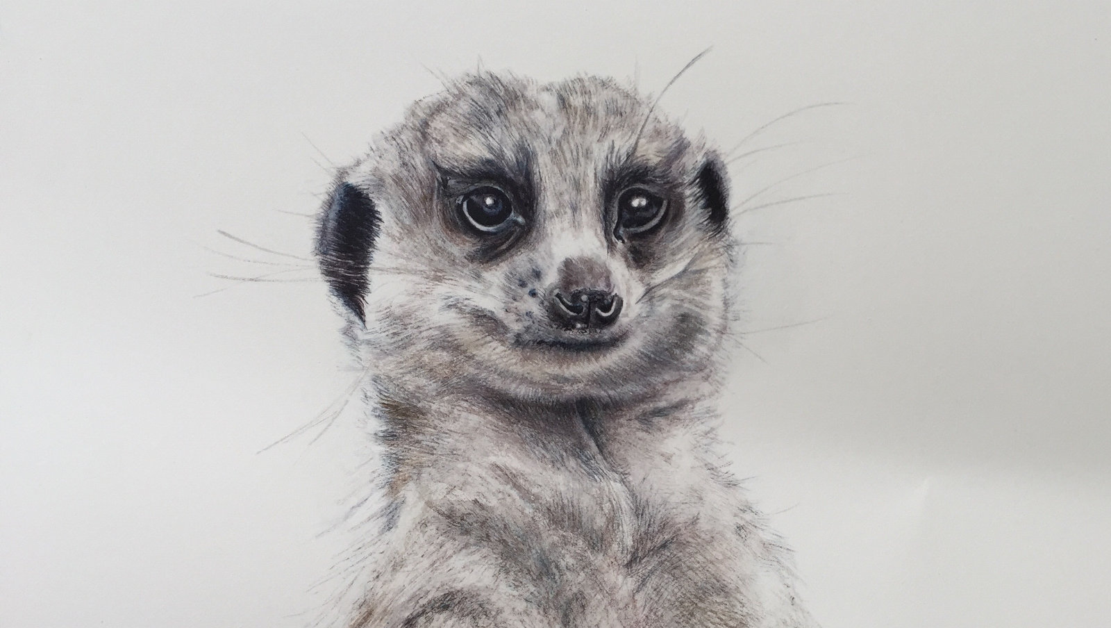 home1 meerkat