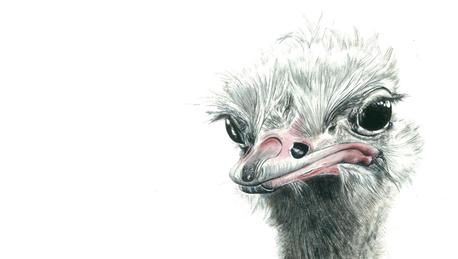 home ostrich
