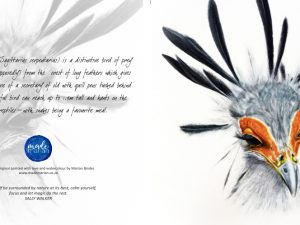 Secretary Bird Card