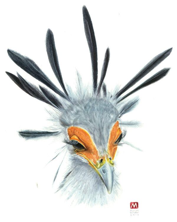 Limited Edition Prints Secretary bird