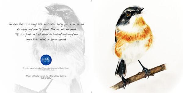 Cape Batis Card Made Marian Art Cards Watercolours
