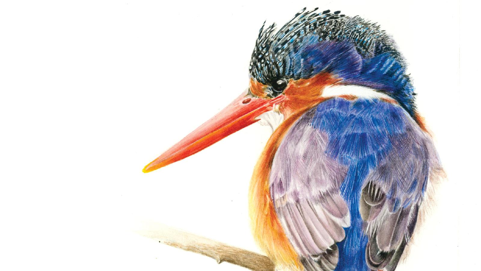 home4 kingfisher