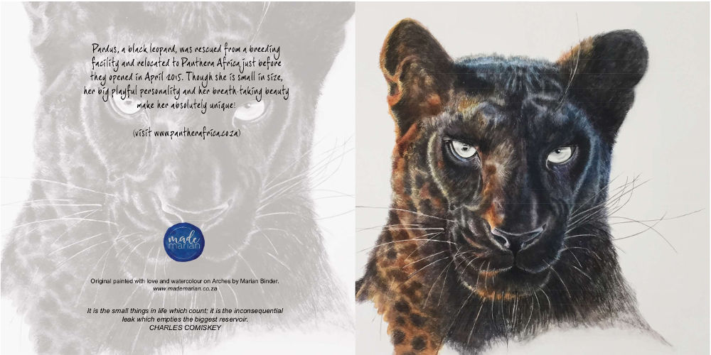 Pardus the Black Leopard Art Card Buy Online