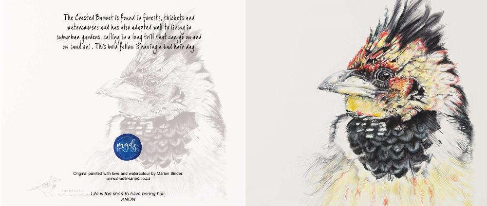Crested Barbet Art Card Made Marian Shop Online