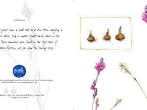 Ixia flexuosa Art Card Made Marian