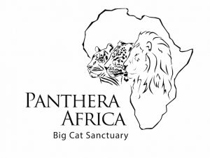PantheraAfrica - Big Cat Sanctuary - Stanford