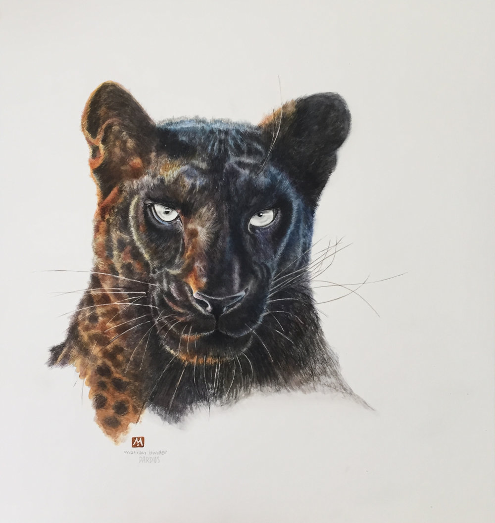 Pardus the Black Leopard Limited Edition Prints Made Marian