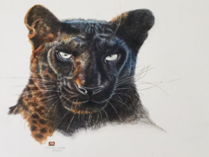 Pardus the Black Leopard - Prints - MadeMarian - PantheraAfrica Big Cat Artwork