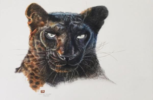 Pardus the Black Leopard - Prints - MadeMarian - PantheraAfrica Big Cat Artwork