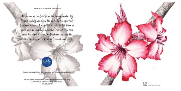 Adenium multiflorum Impala Lily 125mm square art cards mademarian watercolours order online-min