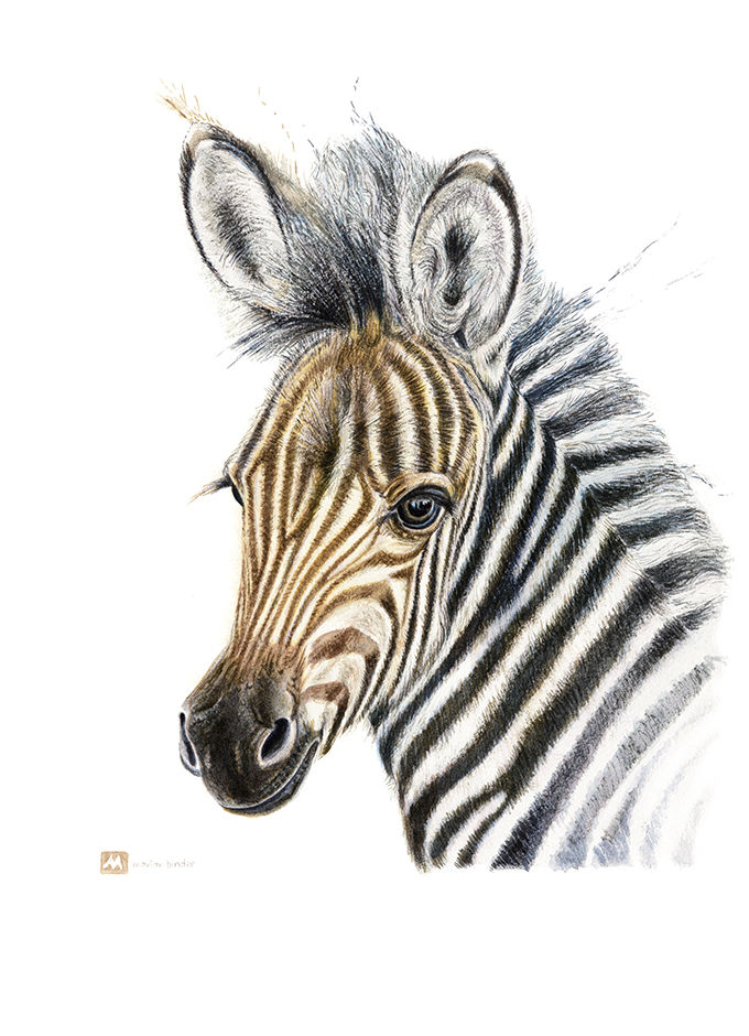 Zebra foal MadeMarian origincal watercolour