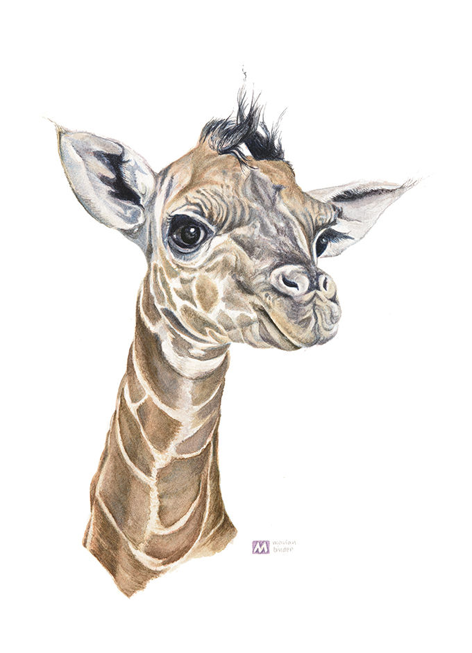 baby giraffe MadeMarian original watercolours